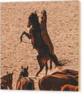 Wild Hooves Wood Print