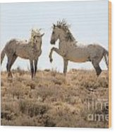 Wild Horse Disagreement  Wood Print