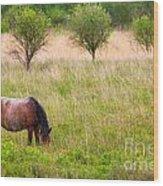 Wild Horse Grazing Wood Print
