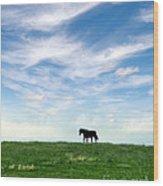 Wild Horse On Grassy Hill Wood Print