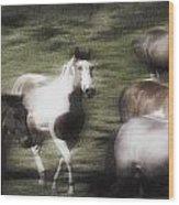Wild Horses On The Move Wood Print