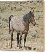 Wild Horses Wyoming - The Mare Wood Print