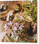 Wild Hyacinth Wood Print