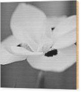 Wild Iris In Black Wood Print