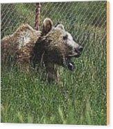 Wild Life Safari Bear Wood Print