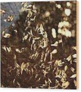 Wild Oats Wood Print