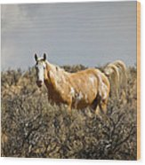 Wild Oregon Horse Wood Print