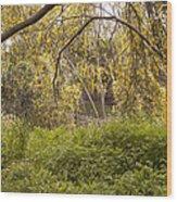 Wild Park Wood Print