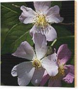 Wild Pink Rambling Rose Wood Print