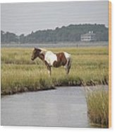 Wild Pony In The Marsh On Assateague Island Md Wood Print