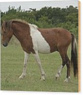 Wild Pony On Assateague Island Maryland Wood Print