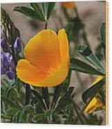 Wild Poppy And Lupine Wood Print