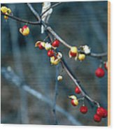 Wild Red Berries Out Of The Shell Wood Print