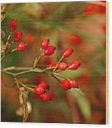 Wild Red Berry Reflections Wood Print