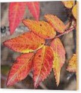 Wild Rose Leaves Wood Print