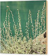 Wild Sage Wood Print