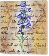 Wild Sage Wood Print by Linda Pope
