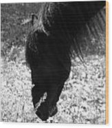 Wild Spanish Mustang Black Stallion Head Shot Wood Print