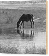 Wild Spanish Mustang Of Obx Nc Wood Print