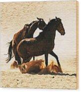 Wild Stallion Clash 3 Wood Print