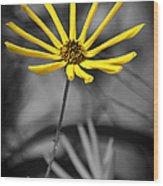 Wild Swamp Daisy Wood Print