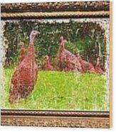 Wild Turkey - 3 Wood Print
