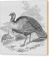 Wild Turkey, 1853 Wood Print