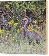 Wild Turkey - Gobbler - Thanksgiving Wood Print