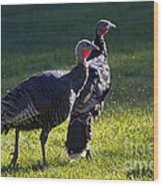Wild Turkeys Wood Print