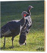 Wild Turkeys Wood Print by Mike  Dawson