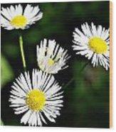 Wildflower 4 Wood Print