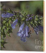 Wildflower Beauty Wood Print