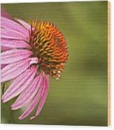 Wildflower Dew Drops Wood Print