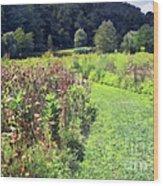 Wildflower Field Afternoon Wood Print