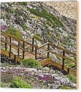 Wildflower Steps Wood Print
