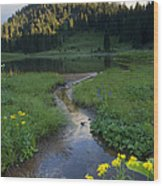 Wildflower Stream Wood Print