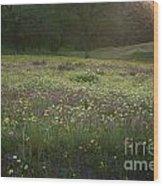 Wildflower Sunburst One Wood Print