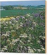 Wildflowers, Near Seaforde, Co Down Wood Print