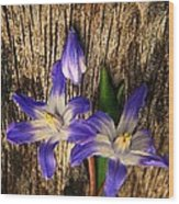 Wildflowers On Wood Wood Print