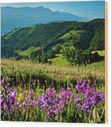 Wildflowers Umbria Wood Print