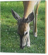 Wildlife Beauty Wood Print