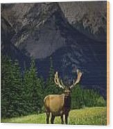 Wildlife In The Mountains Wood Print