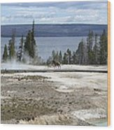 Wildlife In Yellowstone Wood Print