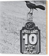Wildlife Watching The Speed Limit Wood Print