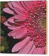 Wildly Pink Mum Wood Print