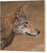 Wile E Coyote Wood Print