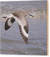 Willet In Flight Wood Print