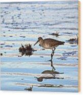 Willet Walks On Water Wood Print