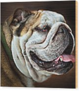 Willie Loves Me An English Bulldog Wood Print by Dorothy Walker