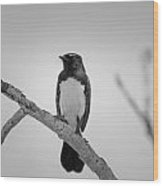 Willie Wagtail V2 Wood Print